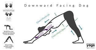 downward facing dog info graph.png