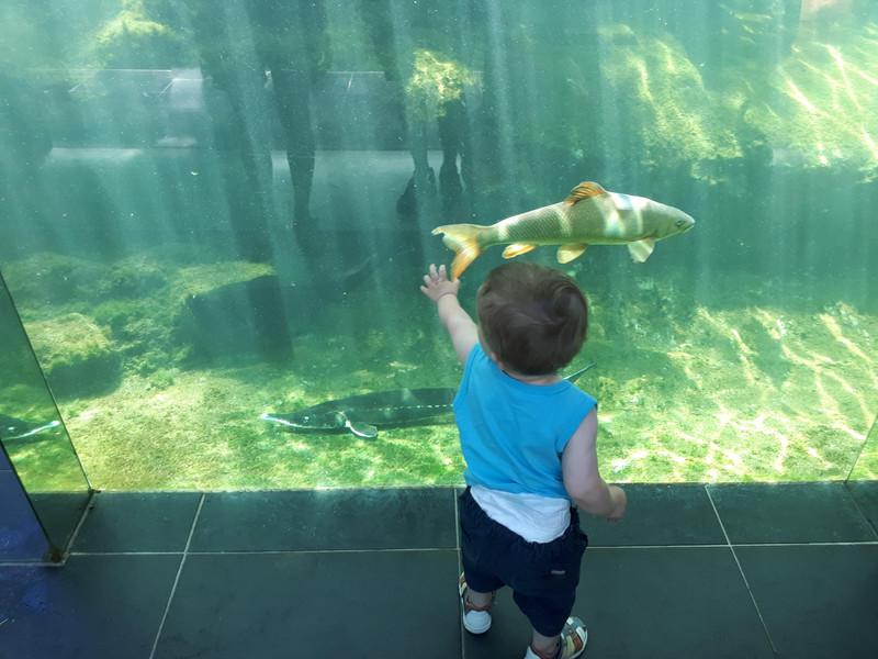 """""""Durant sa visite de l'aquarium du Périgord noir (le plus grand aquarium privé d'eau douce en Europe), on pensait qu'il aurait adoré observer les énormes poissons ainsi que les crocodiles, alligators et serpents de toute taille, mais ce qu'il avait préféré, ça avait été de ramasser les petits cailloux qu'il trouvait par terre... Super""""  Bon, j'ai un peu grossi le trait, il a donné l'air d'être intéressé pour deux ou trois photos, histoire de."""