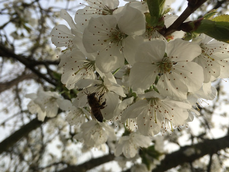 5 tips to transition into Spring