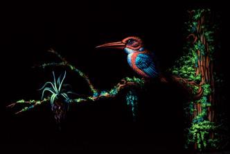 Small_Kingfisher.jpg