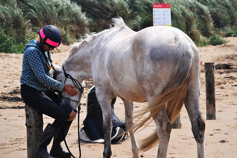 healing_horse.jpg