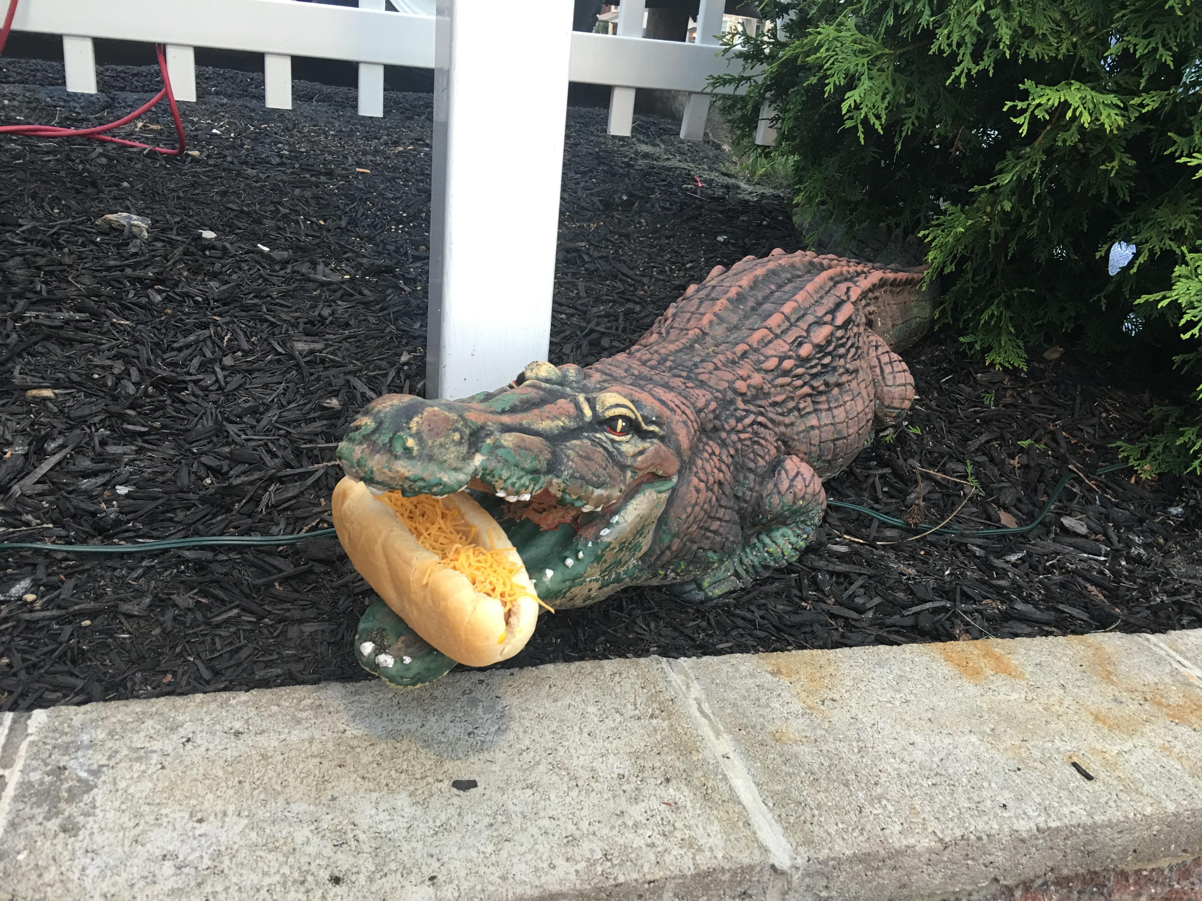 alligator dog