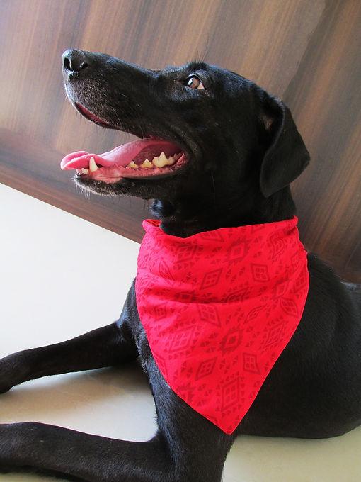 black dog with red bandana.jpg
