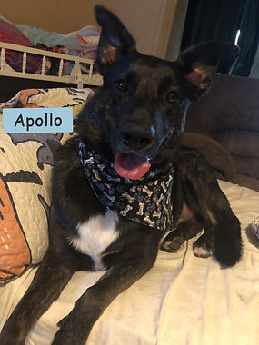 Apollo%20bandana_edited.jpg
