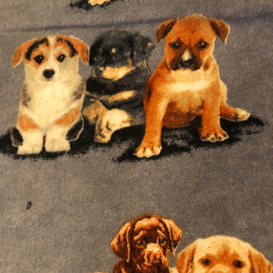 Puppies on Grey
