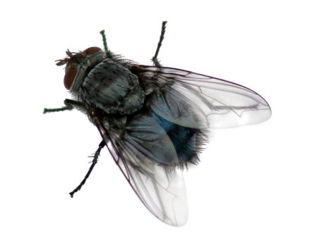 Download-Fly-PNG.png