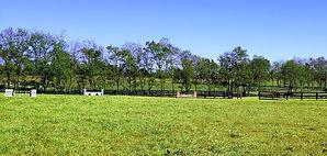 Nicholas jump field.jpg