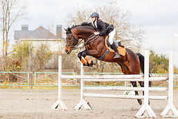 Young female rider on bay horse jumping