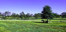 Nicholas farm nice 4.jpg
