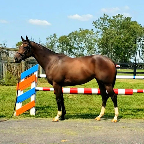 Reagan's Indy Lady-Sold