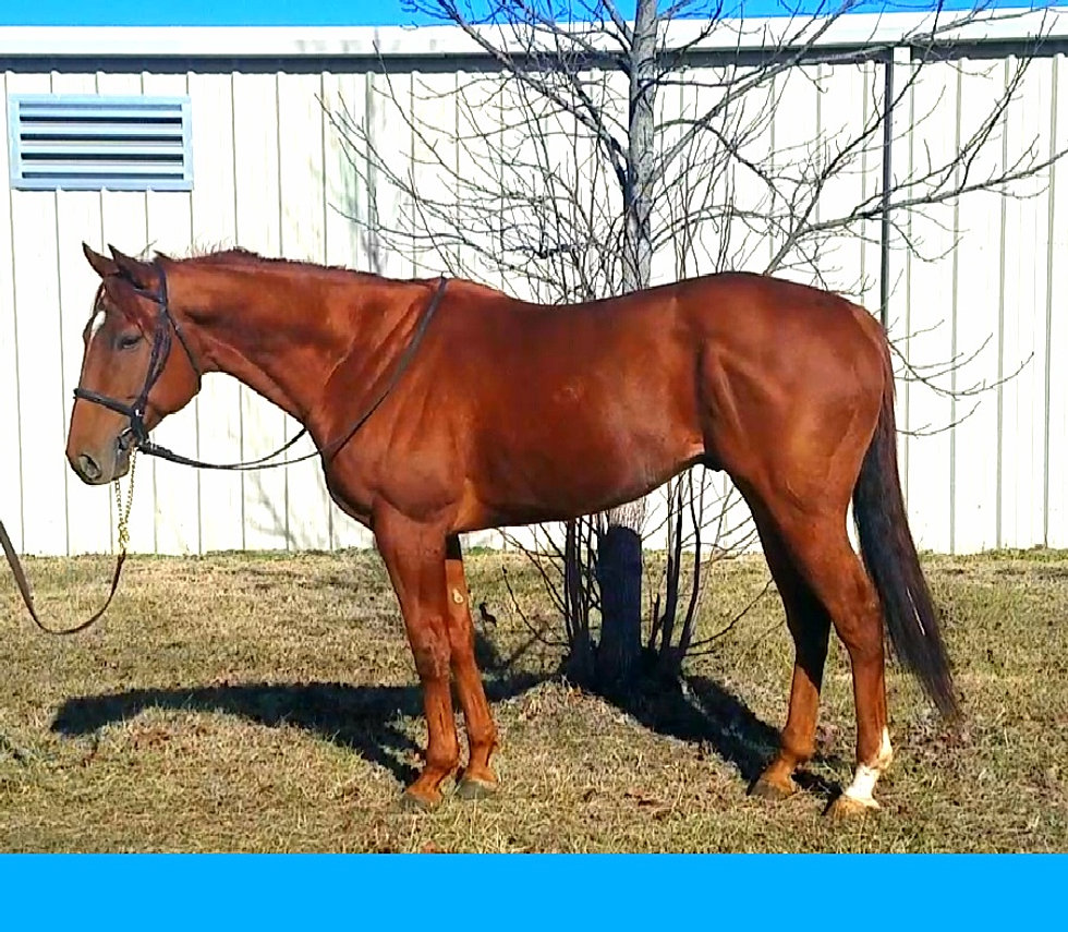 sportdata horse