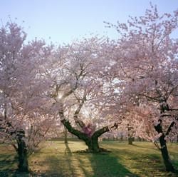 Orchid_Spring_72 (1).jpg