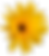 marguerite-1279482_960_720.png