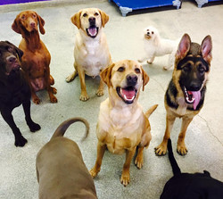 group daycare