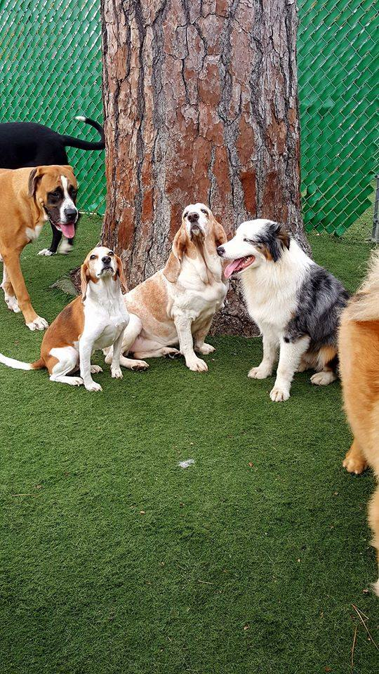 Daycare | Virginia Beach Kennel, Grooming, Daycare
