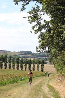 Walk through the vines