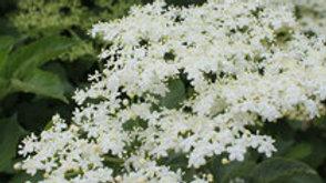 Sureau fleurs : 25 g