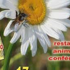 foire au miel et produits bio