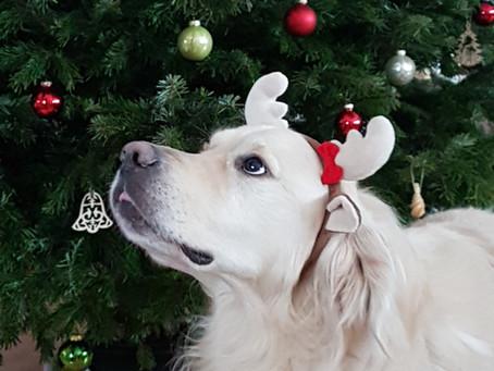 19. Dezember - Die quiub Weihnachtscheckliste
