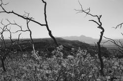 Monotone Mountains
