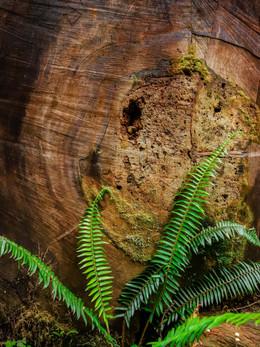 redwoods2019_web-88.jpg