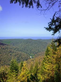 redwoods2019_web-10.jpg