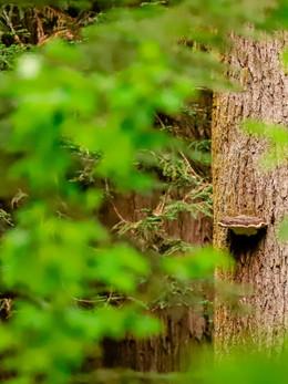 redwoods2019_web-62.jpg