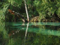 Rainbow River, FL