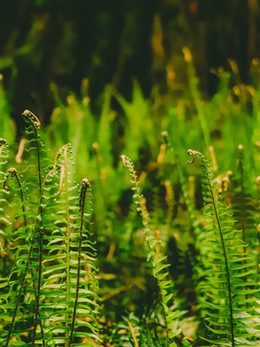 redwoods2019_web-51.jpg