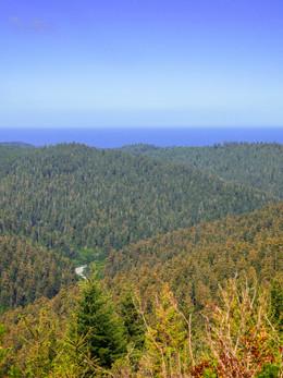 redwoods2019_web-8.jpg