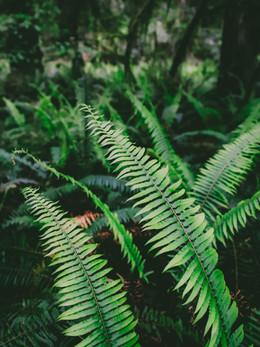 redwoods2019_web-40.jpg