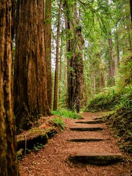 redwoods2019_web-96.jpg