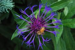 Denver Botanical, Colorado