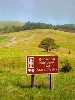 redwoods2019_web.jpg