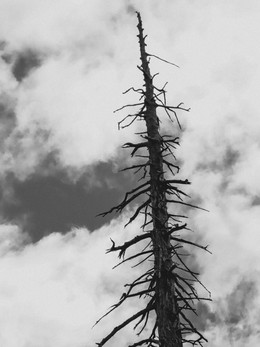 redwoods2019_web-61.jpg