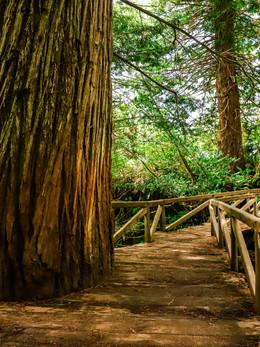 redwoods2019_web-83.jpg