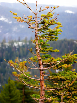 tahoe2019_web.jpg