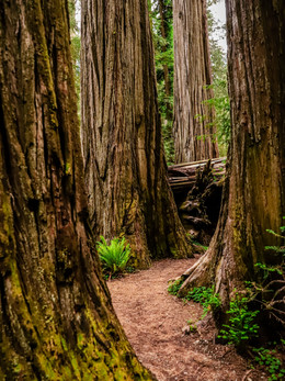 redwoods2019_web-58.jpg