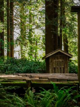 redwoods2019_web-74.jpg