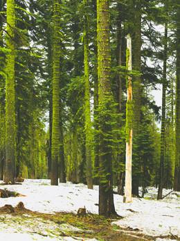 tahoe2019_web-7.jpg