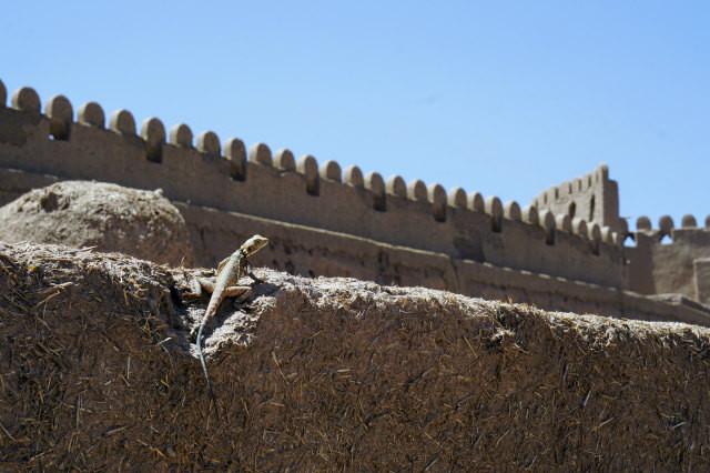 城跡でみつけたトカゲ ライエン イラン