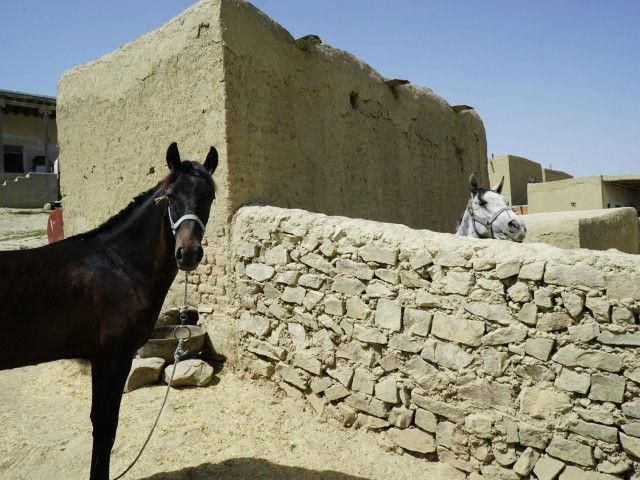ドゥイドフ村 イラン トルキャマン 馬