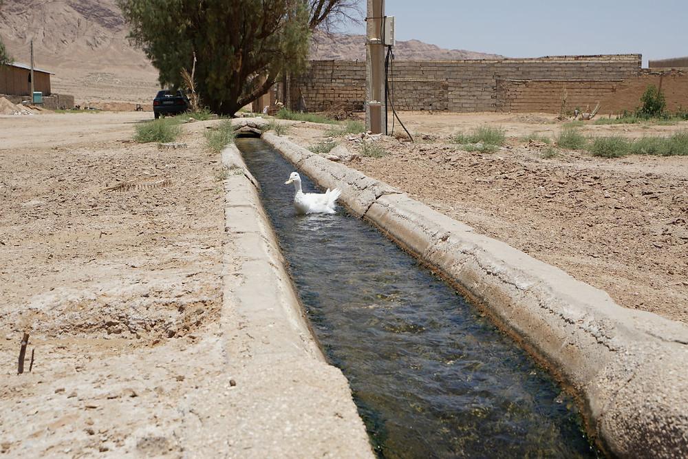アヒル水路