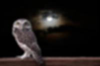 jobs-for-night-owls-career-profession-jo