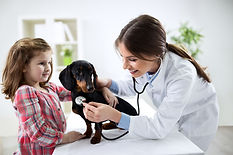 veterinary-clinic-san-diego-north-county