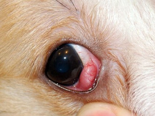 Вишнёвый глаз.