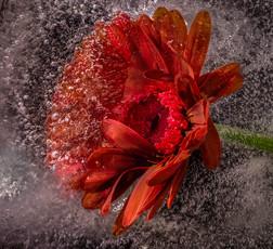 Frozen Flower