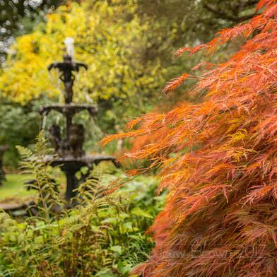 Pine Lodge Garden