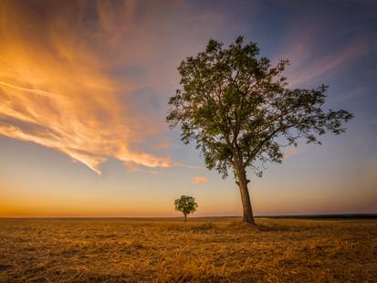 The Walnut Tree Field