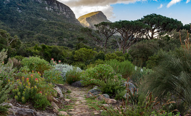 Kirstenbosch View.jpg